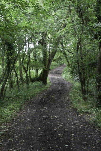 Common Lane, Halstock