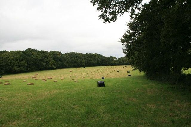 Footpath into Brackett's Coppice near Ryewater Farm