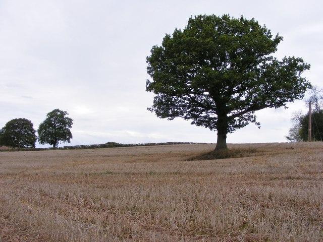Penn Trees