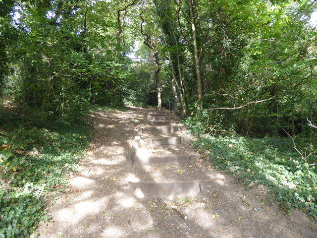 Steps into Bostall Woods