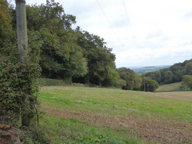 Field by Castle Wood, Cadbury