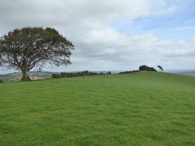 Grassland on the top of Raddon Hills