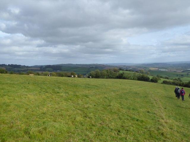 Grassland on east side of Raddon Hill