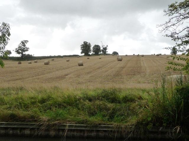 Bales in a field, south-west of Elkington