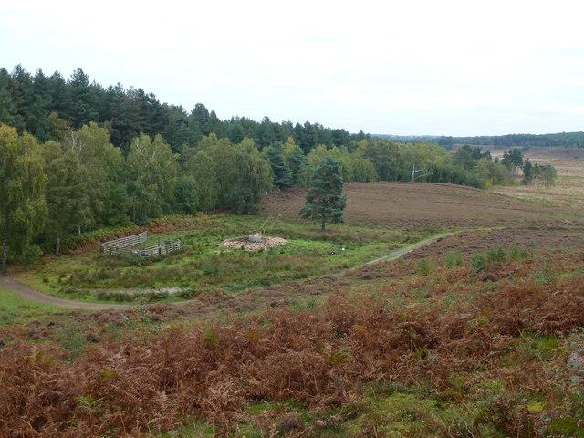 Cattle feeding area on Dersingham Bog, Norfolk