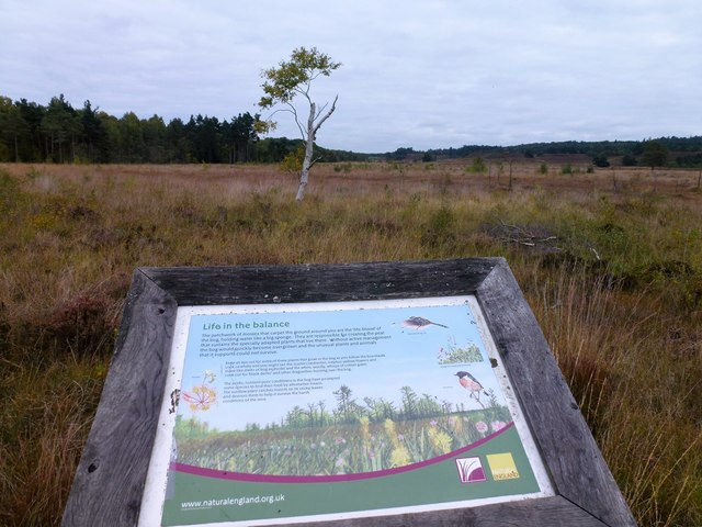Information board on Dersingham Bog, Norfolk