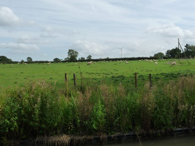 Sheep grazing north-west of Crackshill Farm