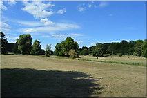 SU8694 : Hughenden Park by N Chadwick