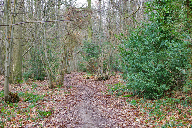 Path into Great and Little Earls Woods