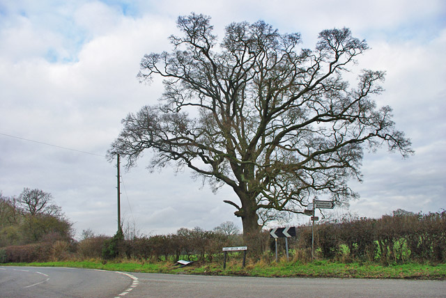 Tree at junction