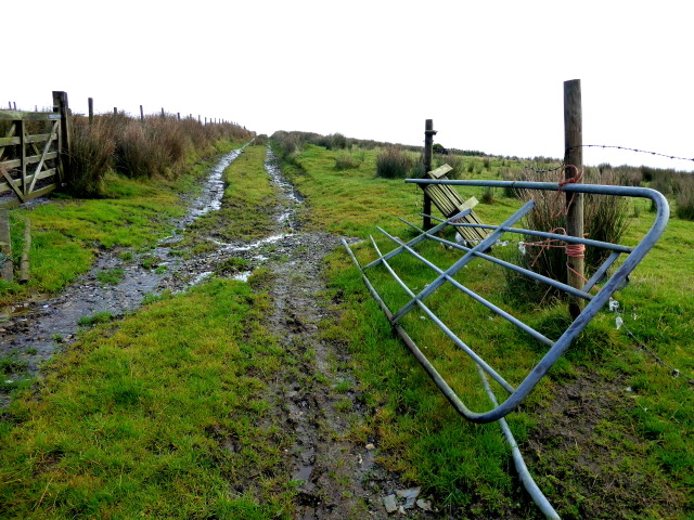 Rough track and gate, Ballynaquilly