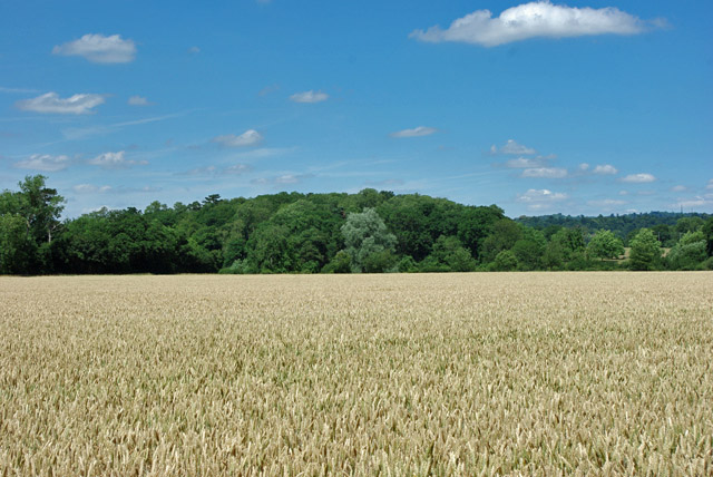 View towards Hilly Furze Field