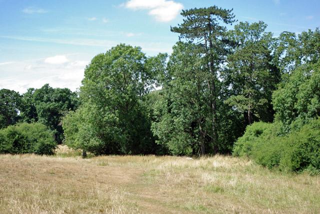 Grassy field by River Mole