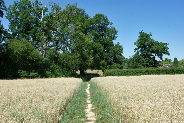 Path through field of oats