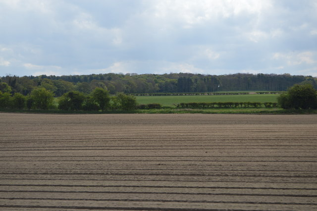 Between Hereward Way and railway