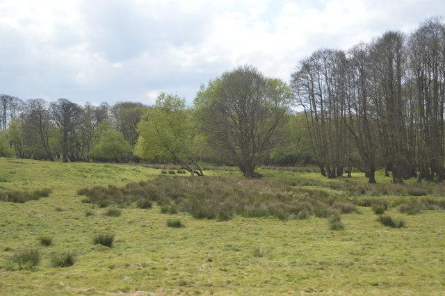 Rough grasses