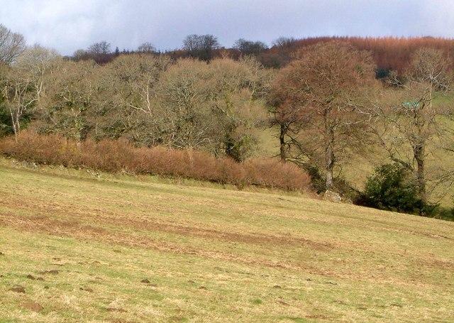 Langworthy Brook valley