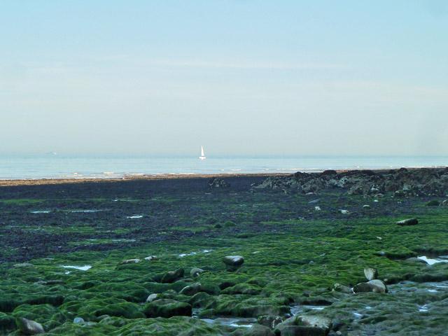 Low tide below the white cliffs
