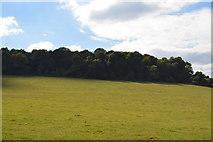 SU8696 : Woodcock Wood by N Chadwick