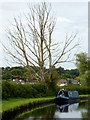 SO8697 : Dead tree and narrowboat near Castlecroft, Wolverhampton by Roger  Kidd
