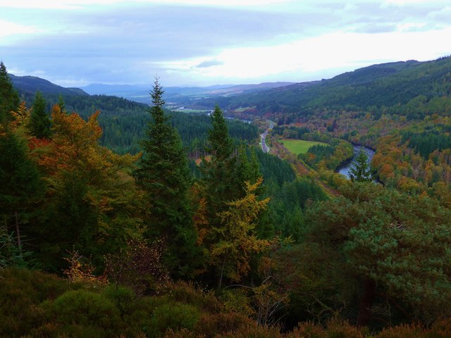 Treescape above the Tay at Dunkeld