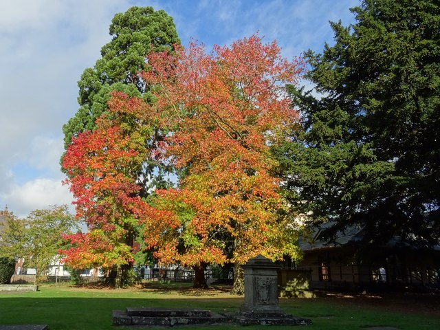 Autumn colour in the abbey grounds