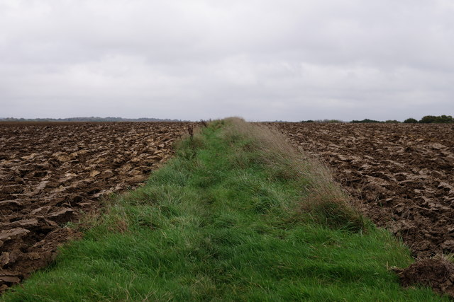 Path Across the Field