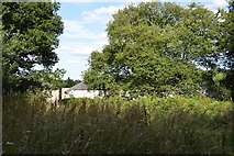 SU8495 : Downley Common by N Chadwick