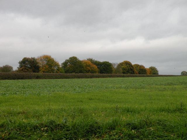 Autumn colours, Bartlow