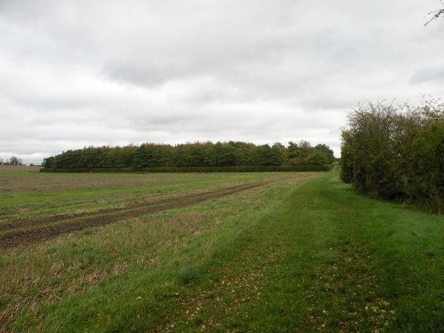 Woods beside the Harcamlow Way