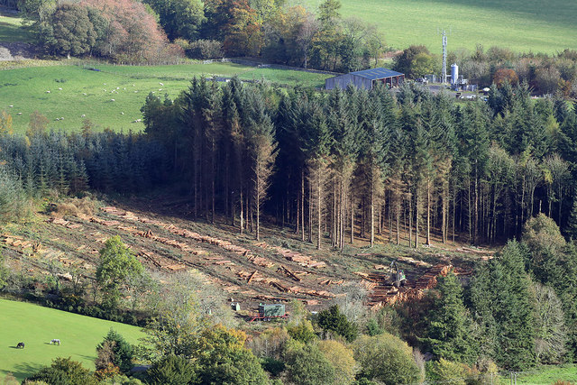 Forestry operations at Yarrowford