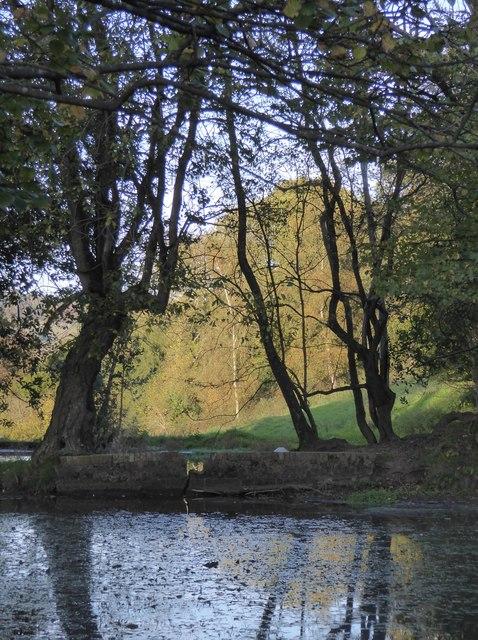 Trees by a pond near Wotton church