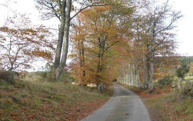 A birkin avenue leading to Learney House lodge