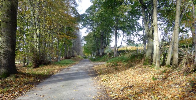 Lane from Pond Cottage to Home Farm, Learney