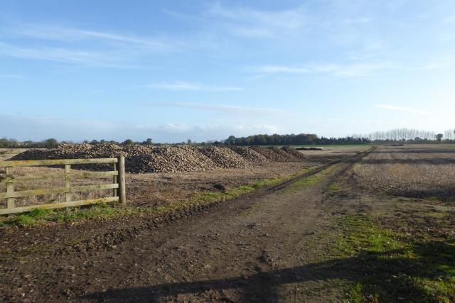 Field track off the B1222