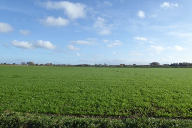 Winter crops growing