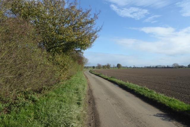 Hedgerow along Ings Lane