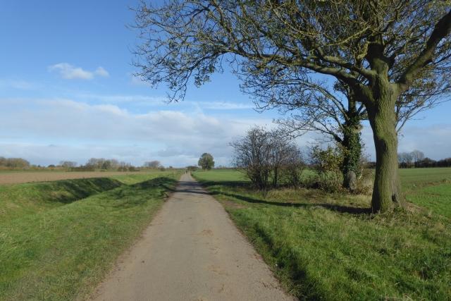 Trees beside Ings Lane