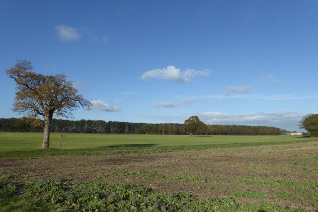 Farmland off Stewart Lane