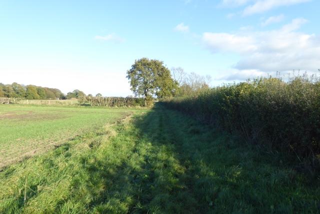 Bridleway towards Escrick and Deighton