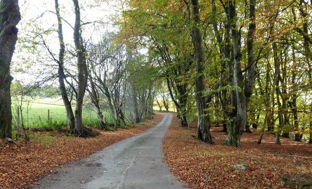 Minor road through 'Netherlands' shelter belt