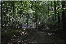 SU8595 : Bridleway, Downley Common by N Chadwick