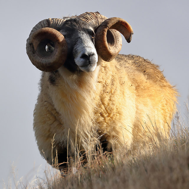 A tup on East Muchra Hill