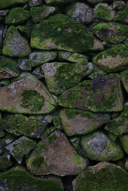 Moss on a wall, Halligarth, Baltasound