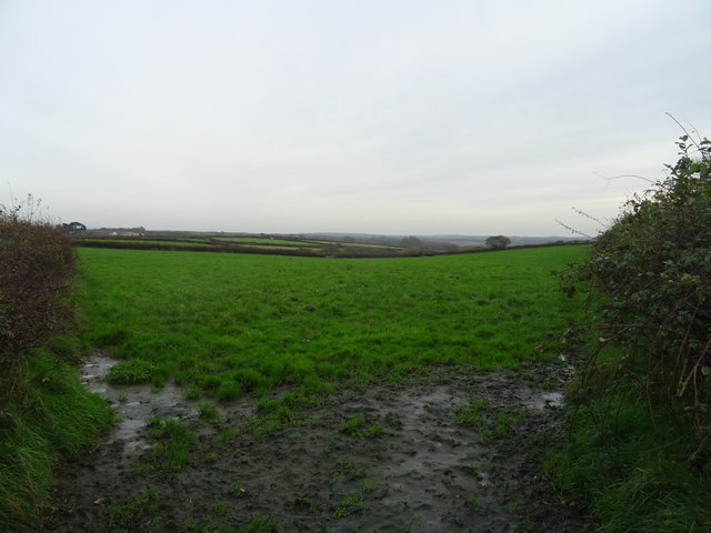 Field near Gelli Groes