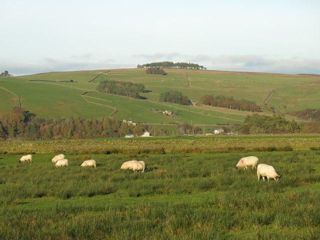 Rough pastures southwest of Pry Hill