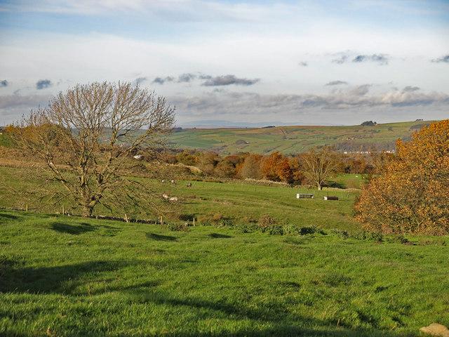 Farmland west of Hollin Close