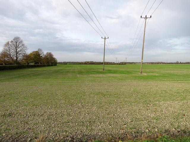 Teversham: autumn-sown field