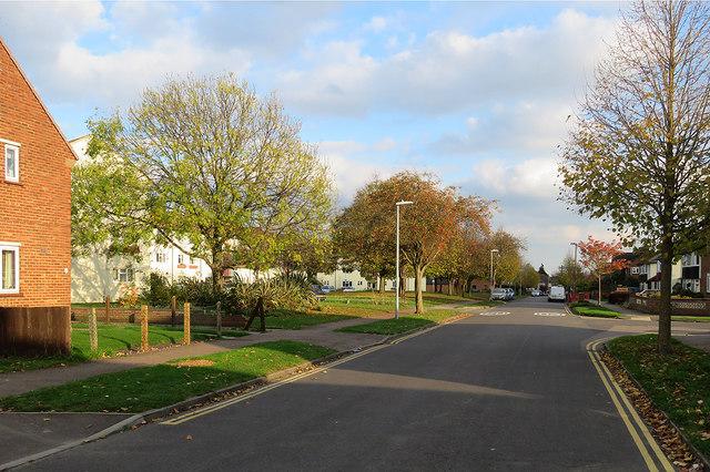 Fanshawe Road: autumn sunlight