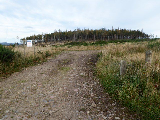 Remains of Balblair Wood after some peripheral felling